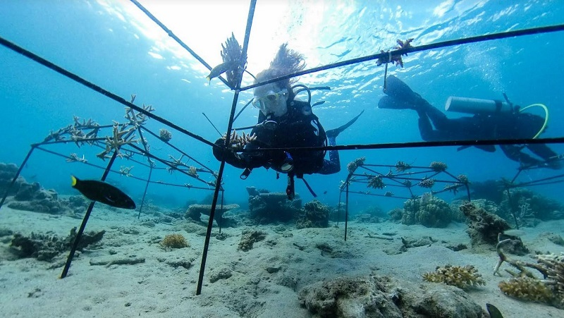 reef_restoration_dodo_pomellato.jpg
